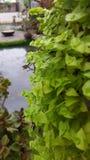 Natural, móvil, verde Imagenes de archivo