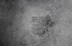 Natural made wall from clay and sand with pressed leaf print Stock Image