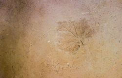 Natural made wall from clay and sand with pressed leaf print Royalty Free Stock Images