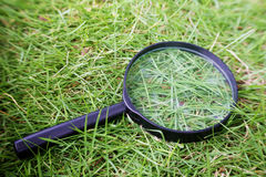 Natural magnifying glass Royalty Free Stock Image