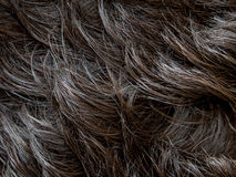Natural Man Hair. Close up Stock Photography