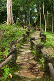Natural man made wood and soil steps in jungle Stock Photo