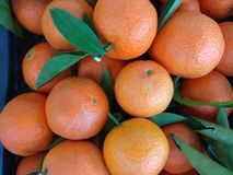 Natural mandarin. Fresh from trees to basket Royalty Free Stock Photography