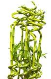 Natural manufacture Stock Image