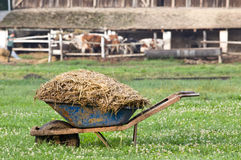 Natural manure. Carts with natural cow manure standing on farm Royalty Free Stock Photo