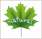 Natural Maple Leaf Stock Image
