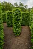 Natural maze wall of trees Stock Image