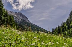 Natural meadow in the mountains stock photos