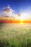 Natural meadow in spring Royalty Free Stock Photography