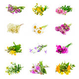 Natural medicinal plants collage isolated Stock Images