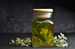 Achillea milfoil tincture. Natural medicine achillea milfoil tincture stock image