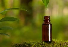 Dripping essential oil into a bottle from leaf. stock image