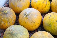 Natural melons. The large round fruit of a plant of the gourd family, with sweet pulpy flesh and many seeds Royalty Free Stock Photography