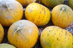 Natural melons. The large round fruit of a plant of the gourd family, with sweet pulpy flesh and many seeds Stock Image