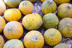 Natural melons. The large round fruit of a plant of the gourd family, with sweet pulpy flesh and many seeds Stock Images