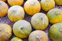 Natural melons. The large round fruit of a plant of the gourd family, with sweet pulpy flesh and many seeds Stock Photography