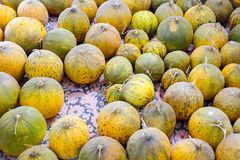 Natural melons. The large round fruit of a plant of the gourd family, with sweet pulpy flesh and many seeds Royalty Free Stock Images