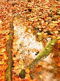 Natural mirror in orange frame. Fallen beech leaves  in water of mountain river Royalty Free Stock Images