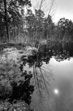 Natural monochromatic landscape with reflection Stock Images