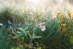 Natural morning sunlight. Floral summer spring background. Spring nature scene. Natural beauty royalty free stock photography