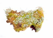 Natural moss decoration on white background Stock Photography