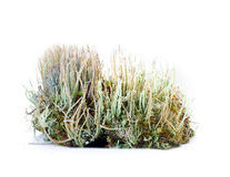 Natural moss decoration on white background Royalty Free Stock Photography