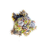 Natural moss decoration on white background Stock Images
