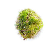 Natural moss decoration on white background Stock Photo