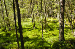 Natural moss wood Royalty Free Stock Images