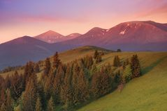 Natural mountain landscape during sunrise. At the summer time. High mountains and forest Stock Images