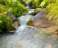Natural mountain stream among green plants. Natural mountain stream among stones and green plants Royalty Free Stock Photos
