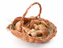 Natural mushrooms in basket Stock Photos
