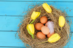 Natural nest with chicken eggs Royalty Free Stock Image