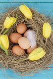 Natural nest with chicken eggs Stock Photo