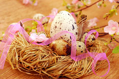 Nest with quail eggs for easter Stock Photos