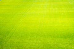 Natural new green grass texture new playground royalty free stock photo