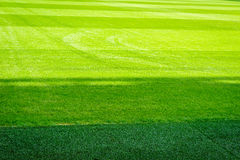 Natural new green grass texture new playground stock photo