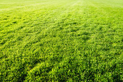 Natural new green grass texture new playground Stock Photography