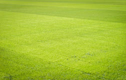 Natural new green grass texture new playground Royalty Free Stock Image