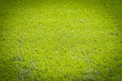 Natural new green grass texture new playground Royalty Free Stock Photography