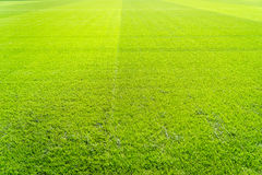 Natural new green grass texture new playground Royalty Free Stock Photos