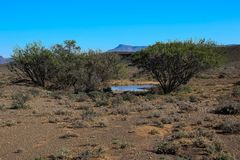Natural oasis in a dry and arid Karoo. Rain water forms a natural pond in the otherwise dry and arid landscape of the Karoo natural region in South Africa image Royalty Free Stock Images