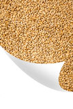 Natural oat grains background, closeup,bent corner of the page Stock Images
