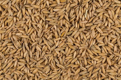 Natural oat grains background, closeup Royalty Free Stock Photography