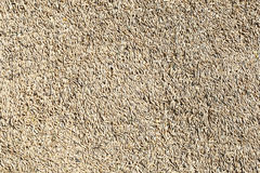 Natural oat grains background Royalty Free Stock Image