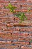 Natural old brick wall texture ancient ruin wall Royalty Free Stock Photography