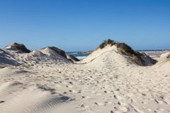 Natural, old and protected sand dunes on the atlantic Portuguese western coast. Natural, old and protected sand dunes on the atlantic western coast of Portugal Stock Photos