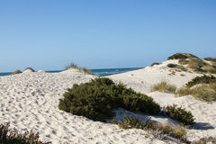 Natural, old and protected sand dunes on the atlantic western coast of Portugal, Peniche, Baleal. Natural, old and protected sand dunes on the atlantic western Royalty Free Stock Photo