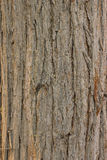 Natural Old Tree Wood Texture and Background Stock Photography