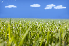 Natural open space and green Royalty Free Stock Photo